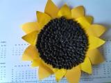 moje Slunečnice