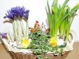 Jarní ošatka proutěná