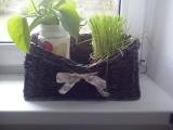 Truhlík na bylinky
