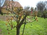 přivítání jara