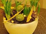 Velikonoční květináče s hyacinty