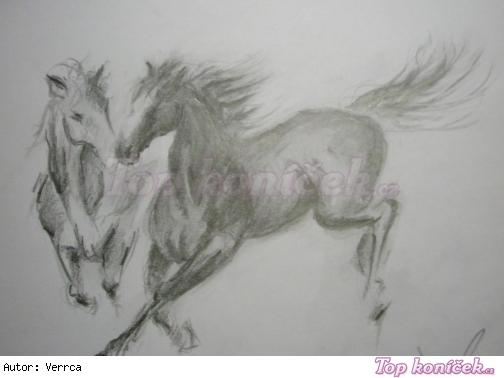 kreslím ráda i zvířátka
